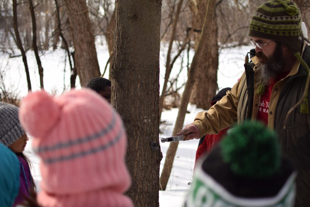 Dodge Nature Center Naturalist Mick Garrett demonstrates tapping a tree for sap collection while students observe.