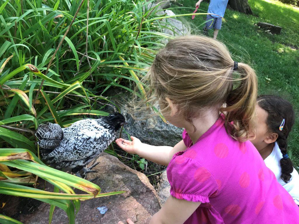 A few Dodge Nature Center preschoolers offer Eddie a snack in the schoolyard.