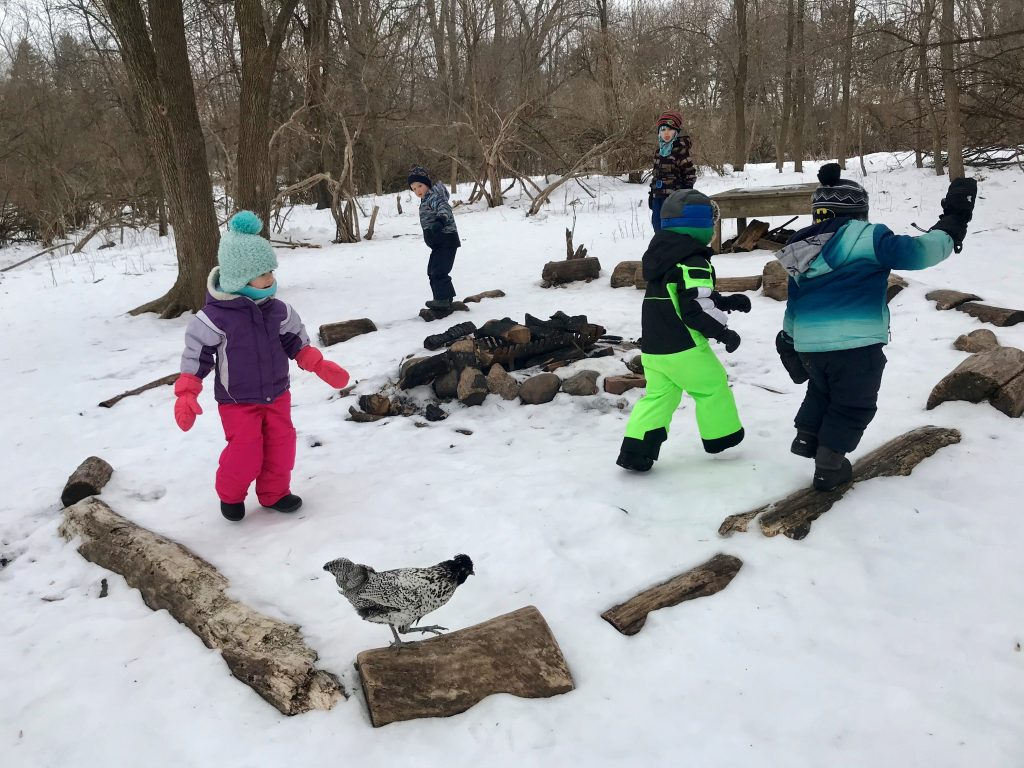 Dodge Nature Preschool's resident chicken, Eddie, joins in on the fun in the snow with preschoolers.