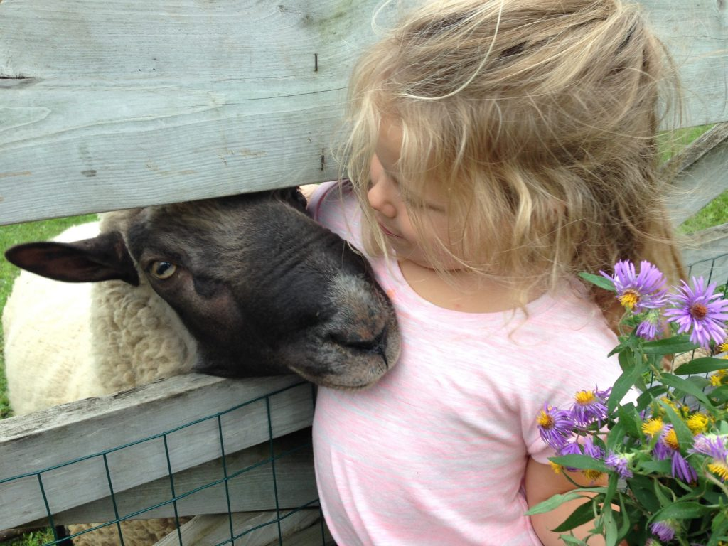 A young girl hugs a sheep on Dodge Nature Center's farm.