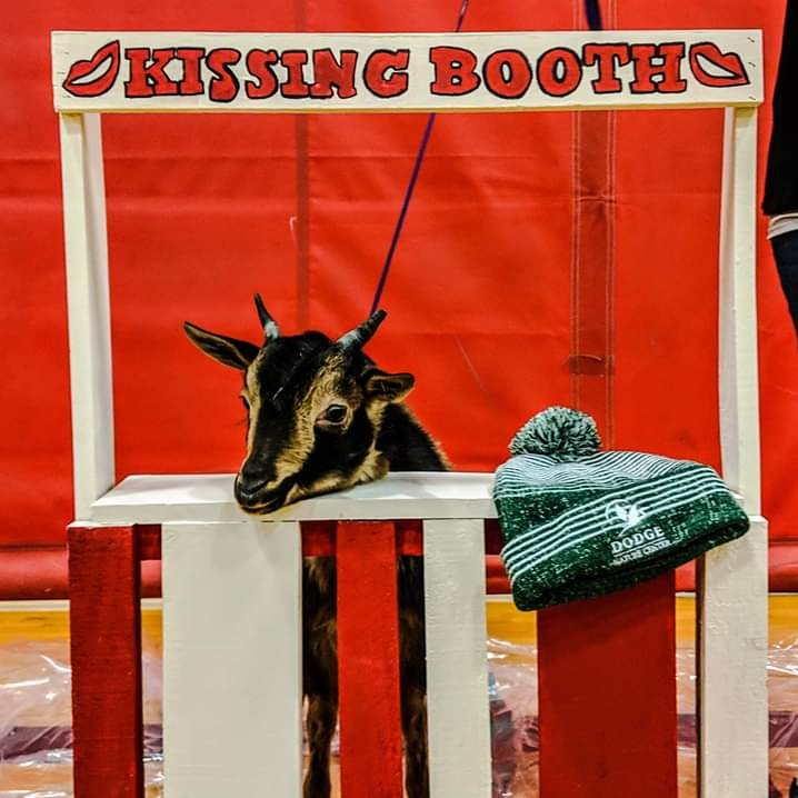 Dodge Nature Center's friendly goat, Cornelius, waits patiently in his Kissing Booth.